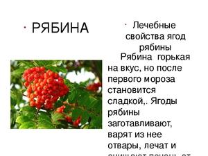 Чем полезна красная рябина