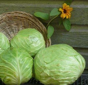 Вред от белокочанной капусты