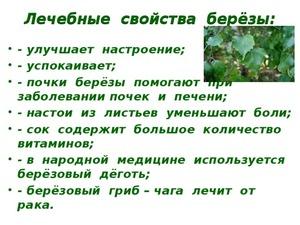 Как правильно использовать березовые листья