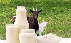 Особенности козьего молока