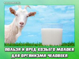 Витамины в козьем молоке